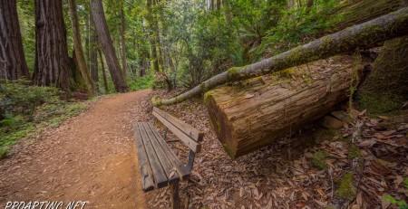 Emerald Ridge and Tall Trees 38