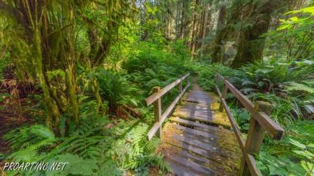 Skunk Cabbage Trail 10
