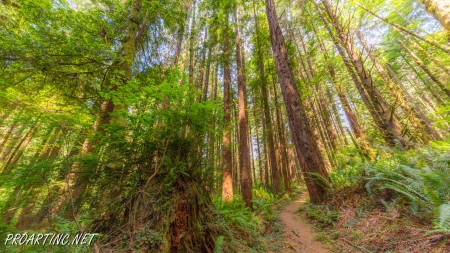 Skunk Cabbage Trail 13