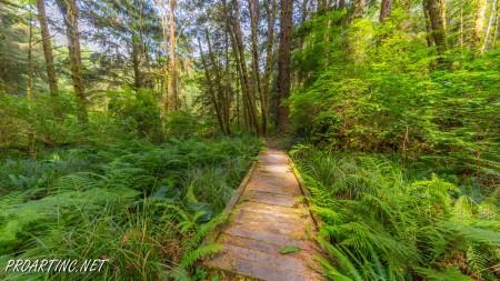 Skunk Cabbage Trail 14