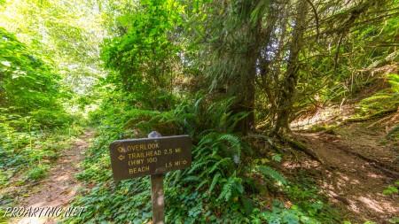 Skunk Cabbage Trail 17