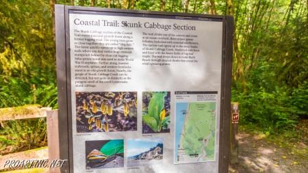 Skunk Cabbage Trail 2