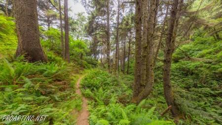 Skunk Cabbage Trail 21