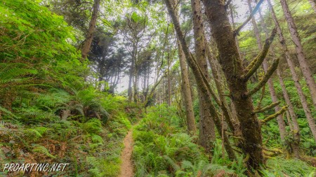 Skunk Cabbage Trail 22