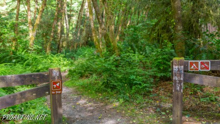 Skunk Cabbage Trail 3