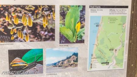 Skunk Cabbage Trail 4