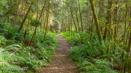 Skunk Cabbage Trail 5