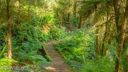 Skunk Cabbage Trail 6