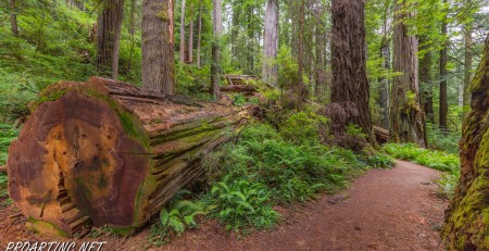 West Ridge and Prairie Creek Trail 12