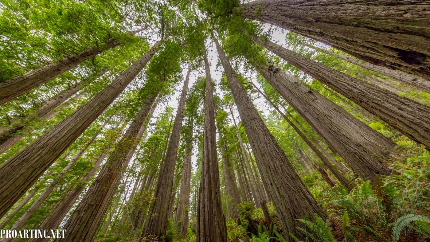 4k wallpaper nature redwoods - photo #12