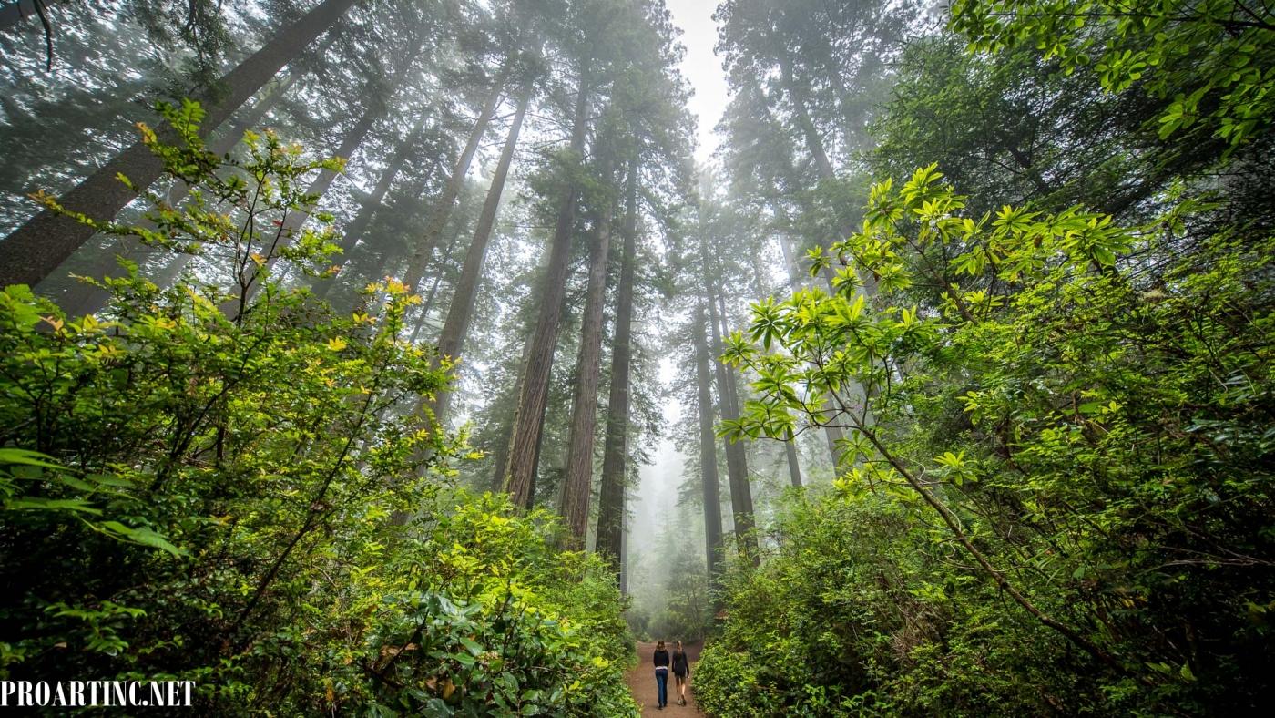 4k wallpaper nature redwoods - photo #46