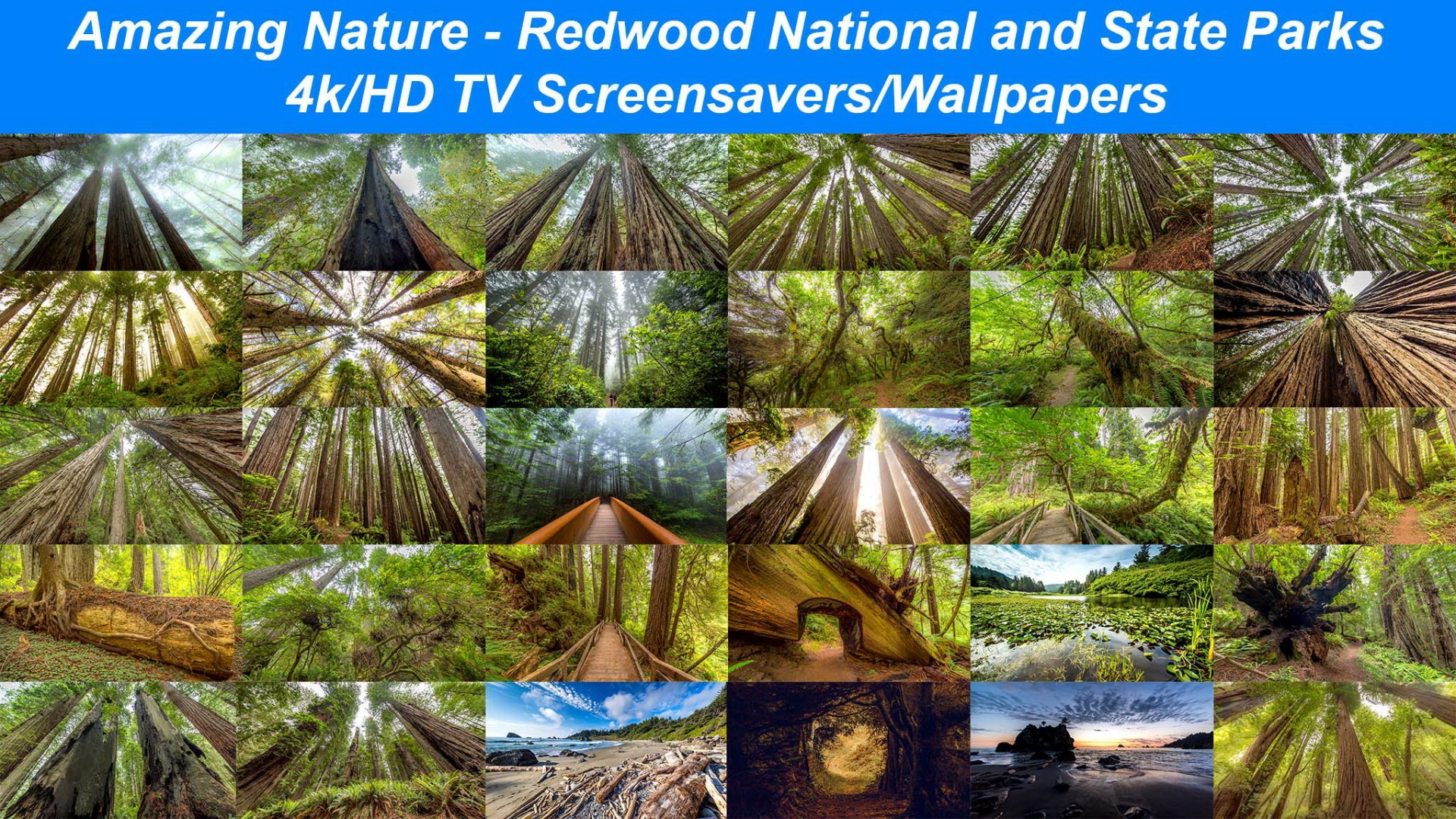 Amazing Nature: Redwood National and State Parks
