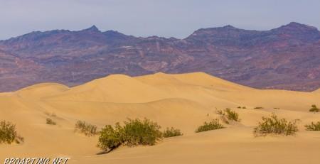 Mesquite Falls Sand Dunes 46