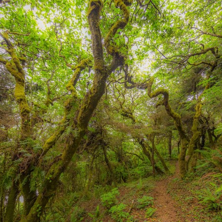 Skunk Cabbage Trail, Redwood National and State Parks