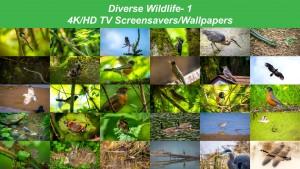 Diverse Wildlife 1