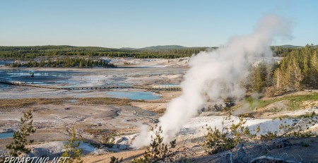 Porcelain Basin of Norris Geyser Basin 20