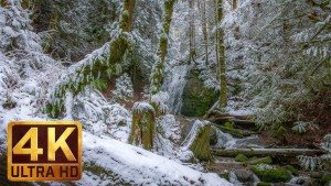 4K Nature Relaxation Video. Water and Forest. Winter. Part 5
