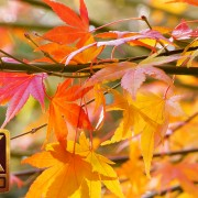 Last Days of Fall - 4K Nature Relaxation Video