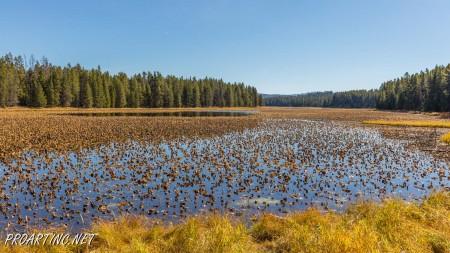 Heron Pond / Swan Lake Loop 13