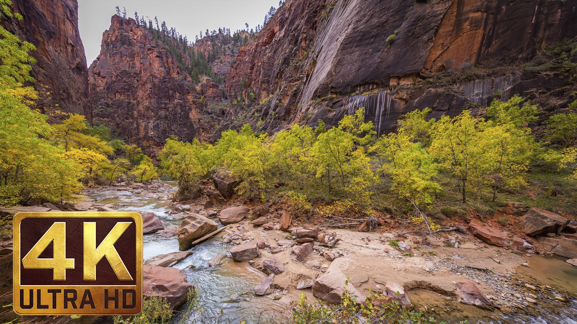4K Nature Photography – Zion National Park