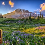 Flower Fields, Music. Part 11