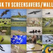 4K TV Screensavers: Animals - 2
