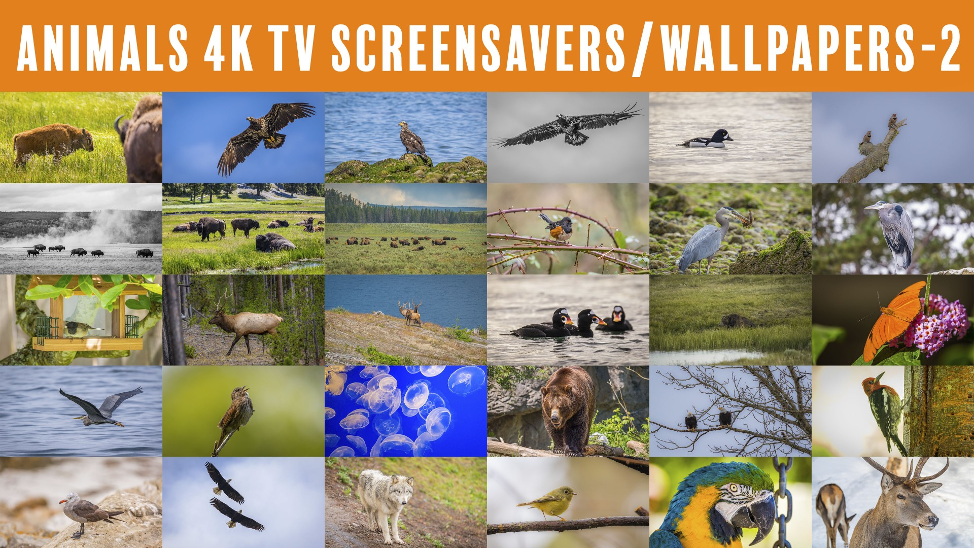 4K TV Screensavers: Animals – 2