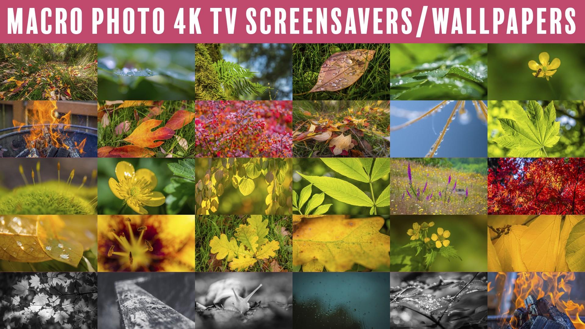 4K Macro Photography