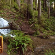 Boy Scout Tree Trail, 4K nature Relaxation Video