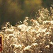 4K Nature Relaxation Video Sunny Morning
