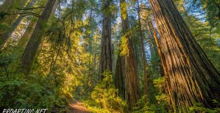Boy Scout Tree Trail 3