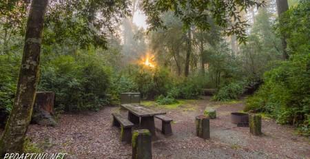 Jedediah Smith Redwoods State Park Campground 5