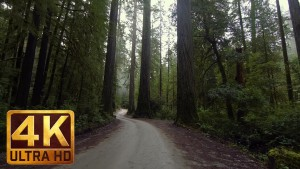 4K Relax Video - Howland Hill Road, Jedediah Smith Redwoods State Park