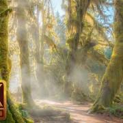 HOHRAIN FOREST 4K TV PHOTOGRAPHY SCREENSAVER Youtube