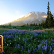 WILD FLOWERS OF MT RAINIER youtube 3 hours loop