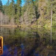duck-pond-2