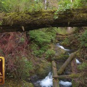 4K Waterfall in Forest - Quinault Rainforest Loop Trail - 2.5 HRS