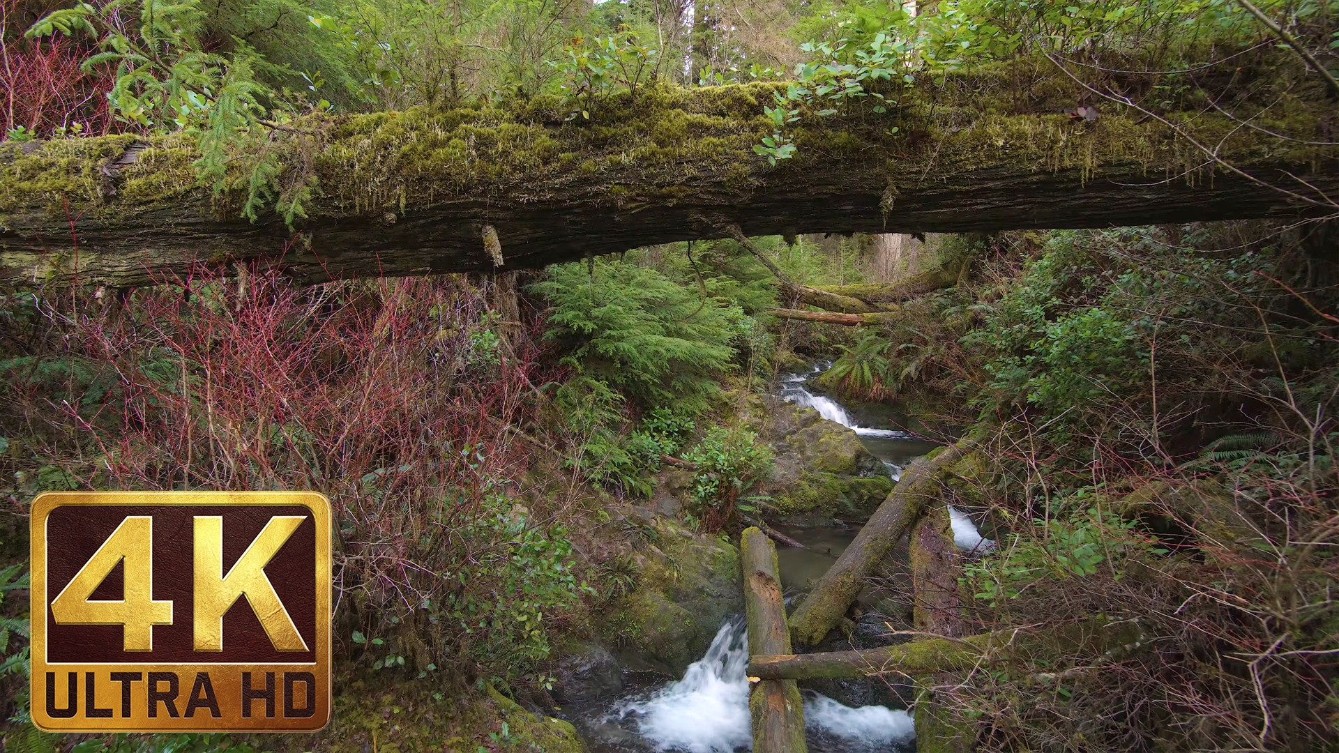 4K Waterfall in Forest – Quinault Rainforest Loop Trail – 2.5 HRS