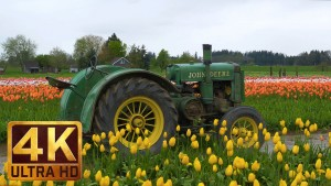 Wooden Shoe Tulip Festival. Part 1 - 4K Nature Relax Video