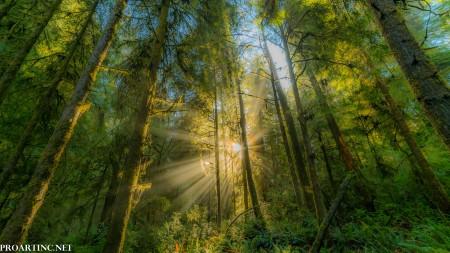 Hatton Trail, Jedediah Smith Redwood State Park