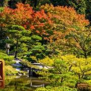 Japan garden autumn-2