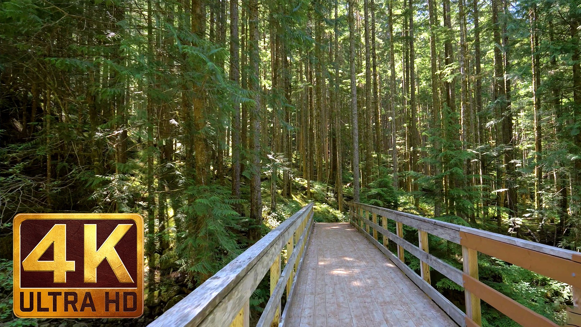 MIDDLE FORK TRAIL, Snoqualmie region