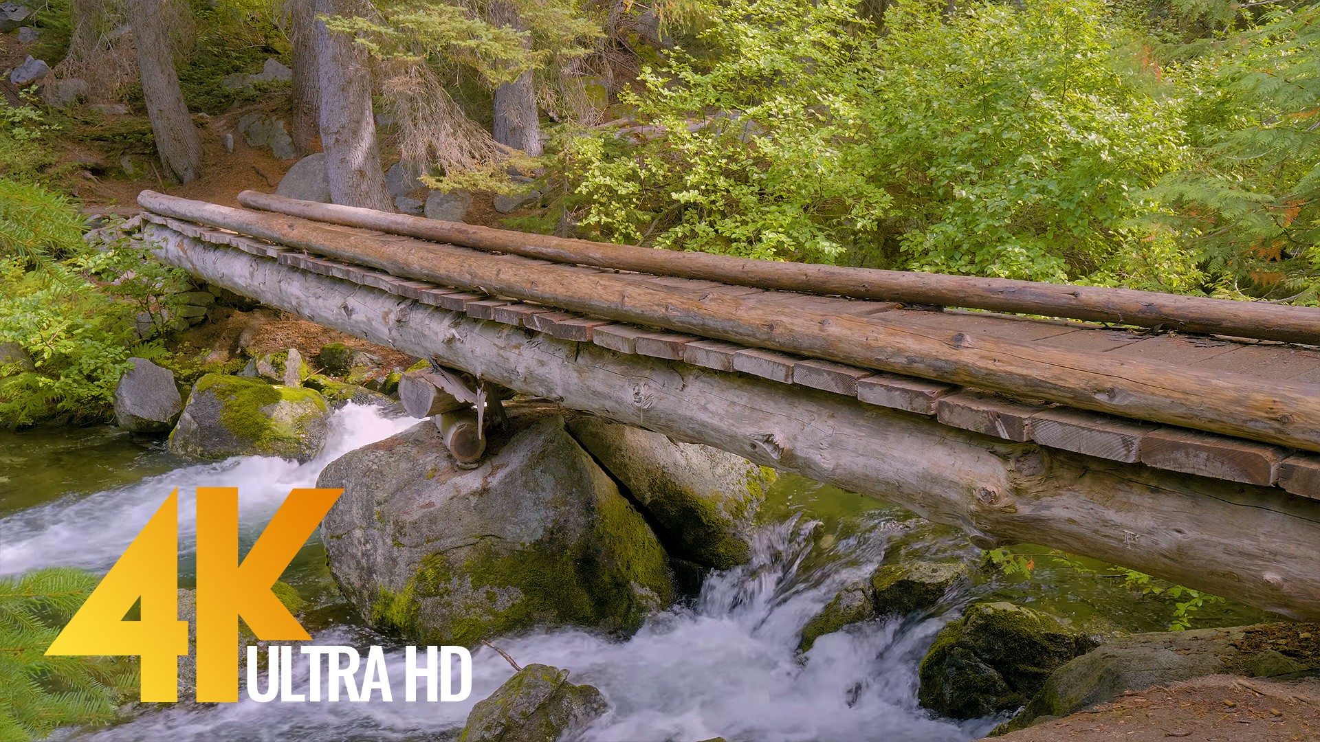 forest-bridge