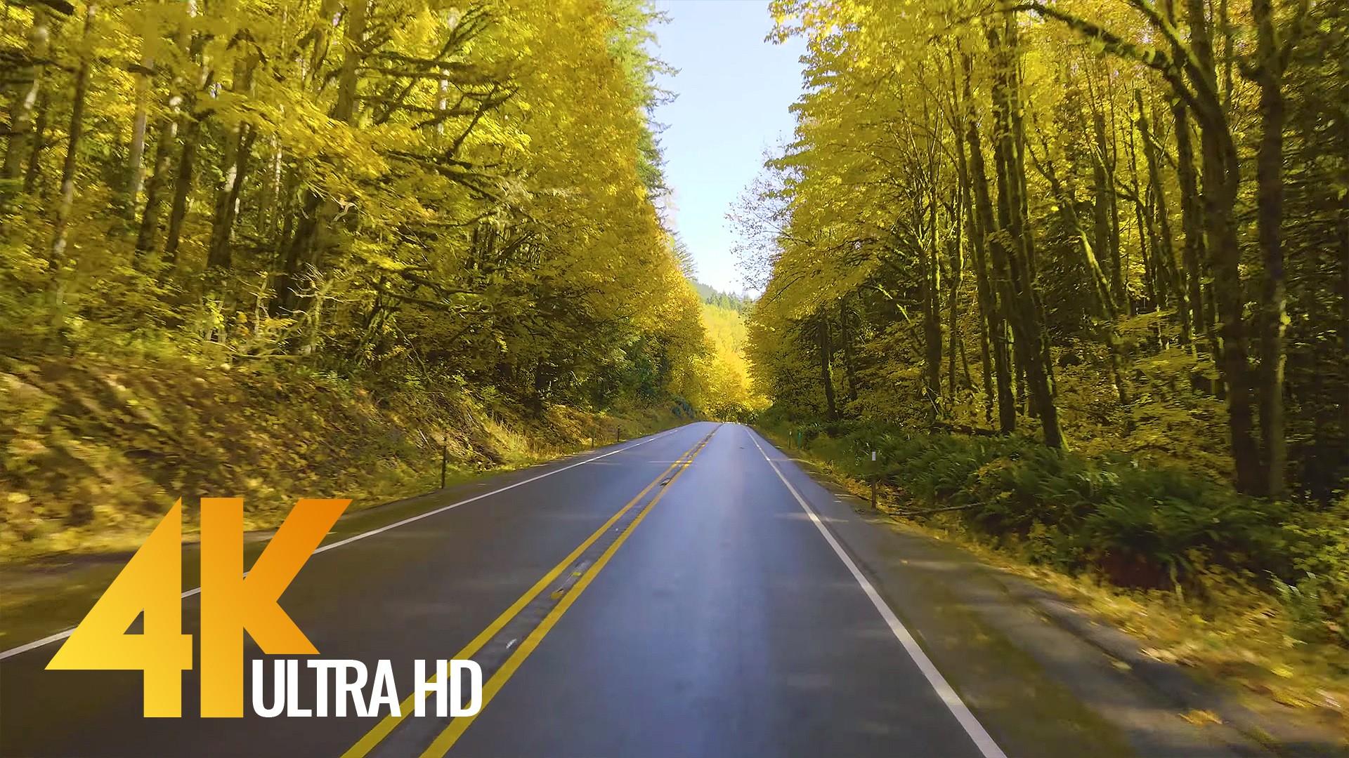 Autumn Road -1 trailer