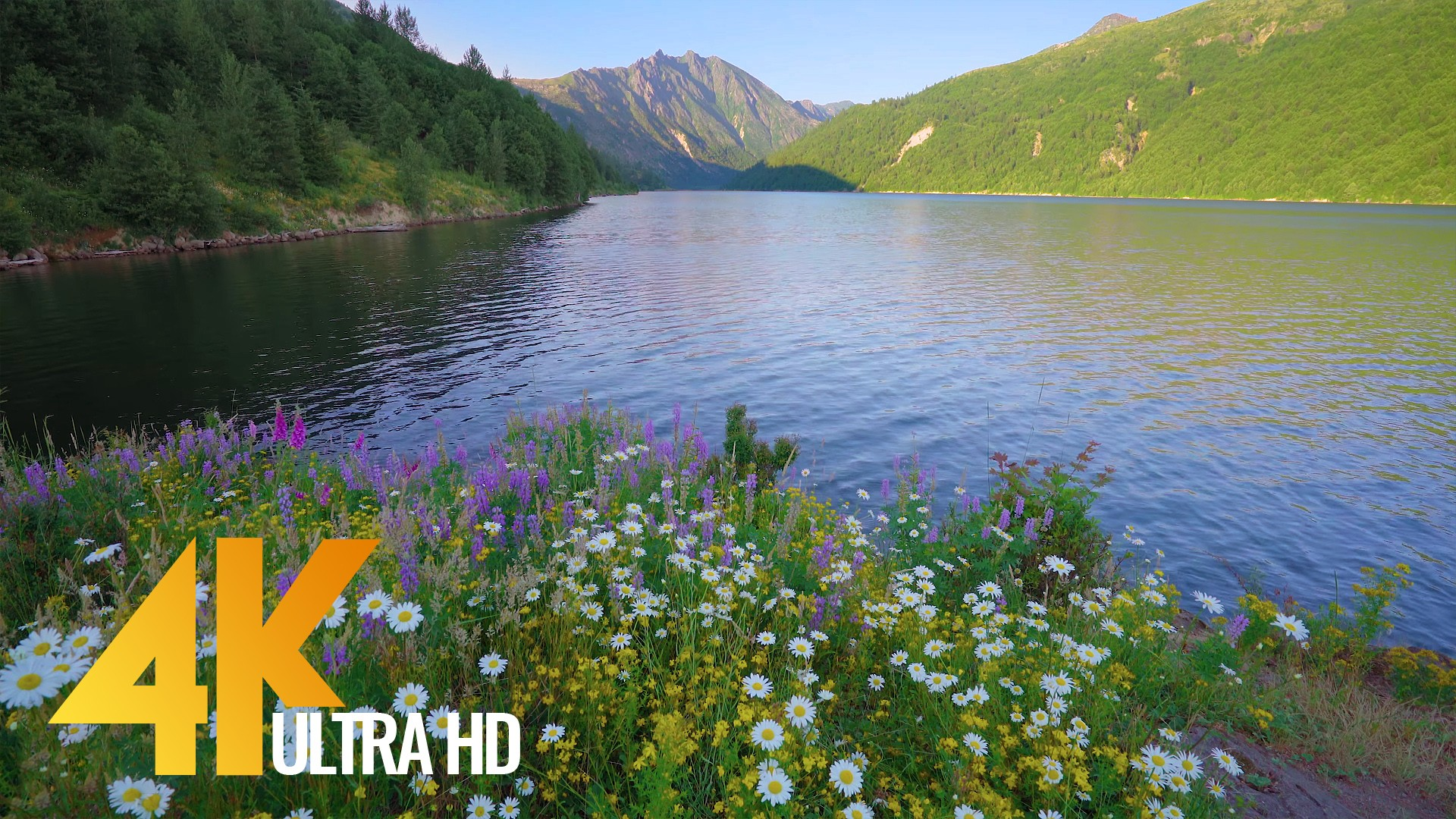 Incredible beauty of the Coldwater Lake Shores, Mount St Helens-1