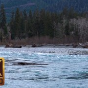 HOH RIVER, OLYMPIC PENINSULA trailer
