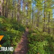 VIRTUAL HIKE cedar butte trail