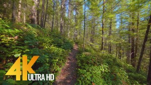 VIRTUAL HIKE cedar butte trail