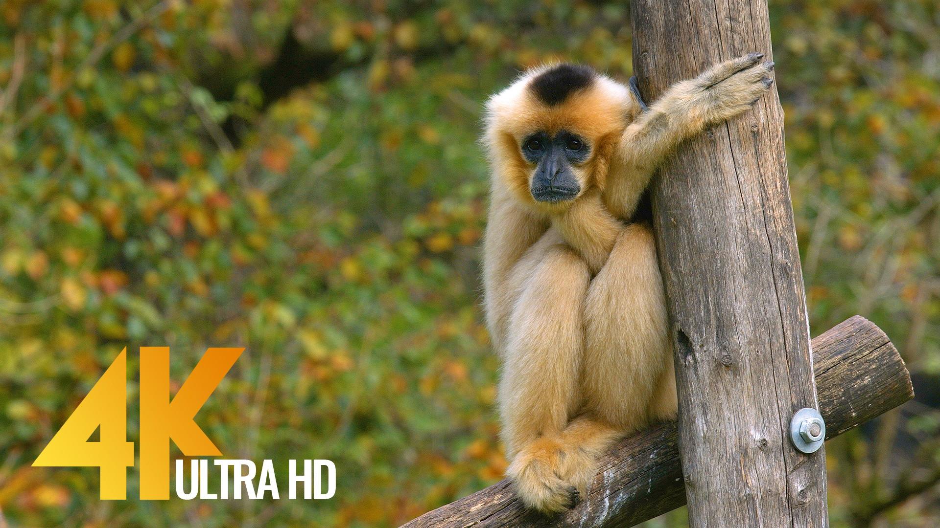 zoo ljubliana-2