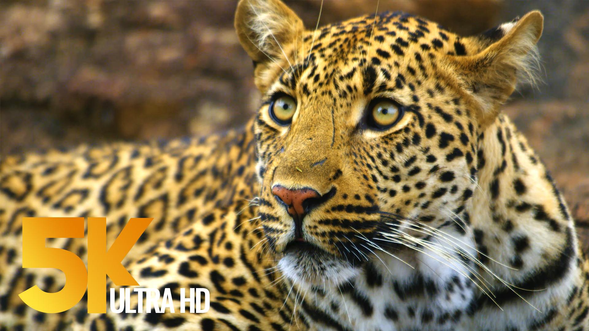 4K Wildlife Video - Kruger National Park, South Africa   ProArtInc